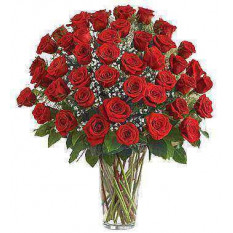 Ultimate Elegance Premium Long Stem Red Roses (24 Steam)
