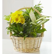 Com Love Dish Garden & Fresh Cut Flowers