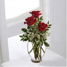 Romance De Rosas (Padrão)
