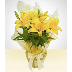Chuva dourada: lírio plantado amarelo